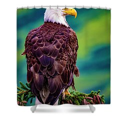 Shower Curtain featuring the photograph Bald Eagle by Norman Hall