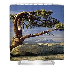 1m6701 Historic Jeffrey Pine Sentinel Dome Yosemite Shower Curtain