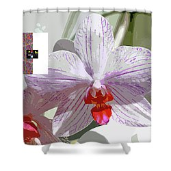 2-1-2057b Shower Curtain