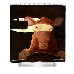 A Sheep At The Wheel... Shower Curtain by Will Bullas