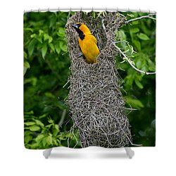 Altamira Oriole Shower Curtain by Anthony Mercieca