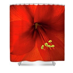 Amaryllis Shower Curtain by Denis Lemay