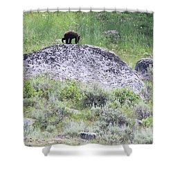 American Black Bear Yellowstone Usa Shower Curtain