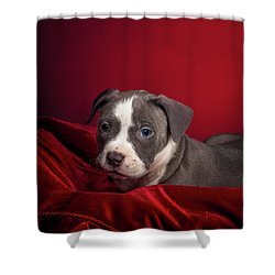 American Pitbull Puppy Shower Curtain