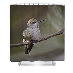 Anna's Hummingbird Shower Curtain by Kathy King