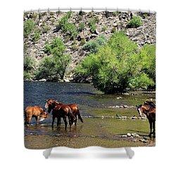 Arizona Wild Horses Shower Curtain