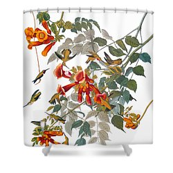 Audubon: Hummingbird Shower Curtain by Granger