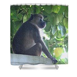 Baboon Sits Guard  Shower Curtain