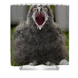 Baby Snowy Owl Shower Curtain