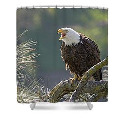 Bald Eagle Shower Curtain by Doug Herr