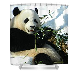 Bao Bao Sittin' In The Snow Taking A Bite Out Of Bamboo1 Shower Curtain by Emmy Marie Vickers