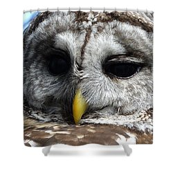 Shower Curtain featuring the photograph Barred Owl by Rebecca Overton