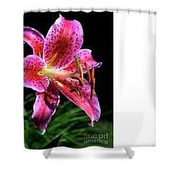 Beaming Shower Curtain by Doug Norkum