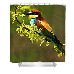 Bee Eater Shower Curtain