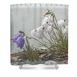 Shower Curtain featuring the photograph Bellflower by Heiko Koehrer-Wagner