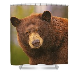 Black Bear Shower Curtain by Brian Cross