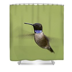 Black-chinned Hummingbird Shower Curtain by Doug Herr