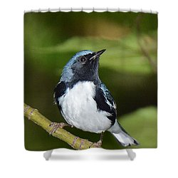 Black-throated Blue Shower Curtain