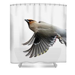 Shower Curtain featuring the photograph Bohemian Waxwing  by Mircea Costina Photography
