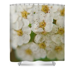Shower Curtain featuring the photograph Bridal Veil Spirea by Brenda Jacobs
