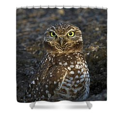 Burrowing Owl Shower Curtain by Doug Herr