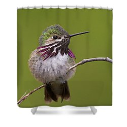 Calliope Hummingbird Shower Curtain