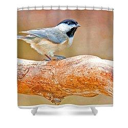 Shower Curtain featuring the photograph Carolina Chickadee On Tree Limb by A Gurmankin