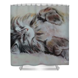 Cat Nap Shower Curtain by Carla Carson