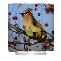 Cedar Waxwing... Shower Curtain