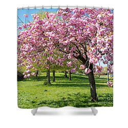 Cherry Blossom Tree Shower Curtain