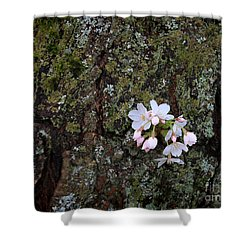 Shower Curtain featuring the photograph Cherry Blossoms by Tari Simmons