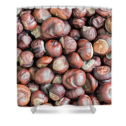 Chestnuts Shower Curtain by Michal Boubin