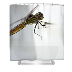 Close Up Shoot Of A Anisoptera Dragonfly Shower Curtain by Ulrich Schade