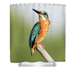 Common Kingfisher Alcedo Atthis Shower Curtain