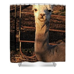 Cria Shower Curtain
