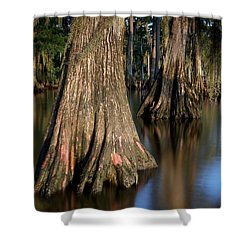 Shower Curtain featuring the photograph Cypress Trees by Evgeny Vasenev