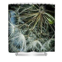 Dandelions Shower Curtain by Iris Greenwell