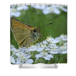 Dion Skipper Yarrow Blossoms Shower Curtain by Michael Peychich