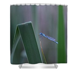 Shower Curtain featuring the photograph Dragonfly by Nikki McInnes