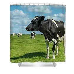 Dutch Cow Shower Curtain