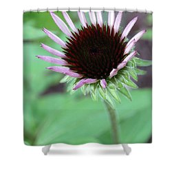Shower Curtain featuring the photograph Emerging Coneflower by Rebecca Overton