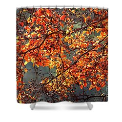 Shower Curtain featuring the photograph Fall Leaves by Nicholas Burningham