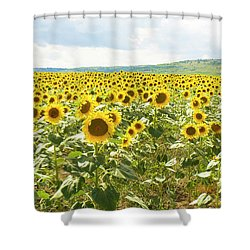 Field With Sunflowers Shower Curtain by Irina Afonskaya