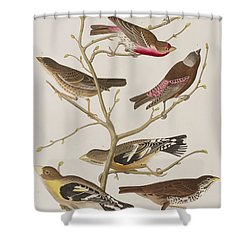 Finches Shower Curtain