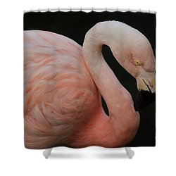Flamingo Shower Curtain by Paulette Thomas