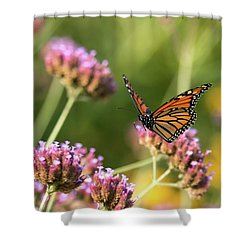 Flight Of The Monarch 1 Shower Curtain