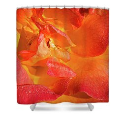 Floribunda Shower Curtain by Denis Lemay