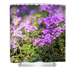 Shower Curtain featuring the photograph Flowering Thyme by Elena Elisseeva
