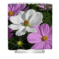 Flowers Shower Curtain by Diane Greco-Lesser