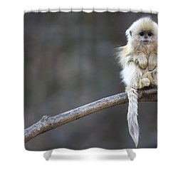 Shower Curtain featuring the photograph Golden Snub-nosed Monkey Rhinopithecus by Cyril Ruoso